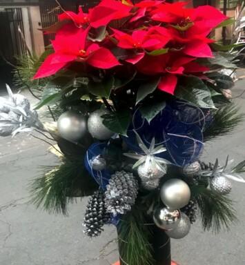 Flores para Navidad a Domicilio en CDMX