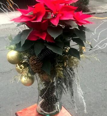 Flor de navidad CDMX