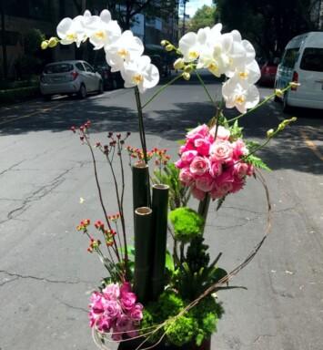 Envió de orquídeas en Ciudad de México