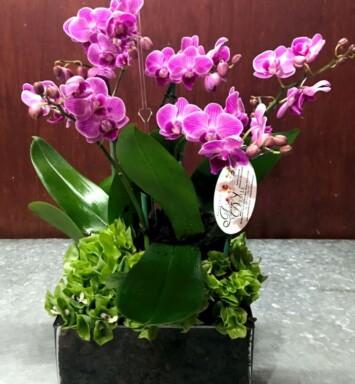 Venta de orquídeas en CDMX