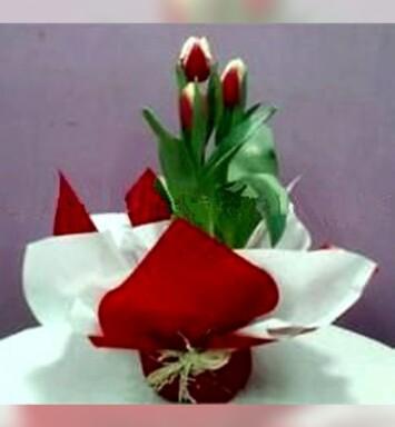Macetas de tulipanes