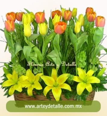 Envió de tulipanes