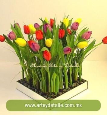 Envía Tulipanes